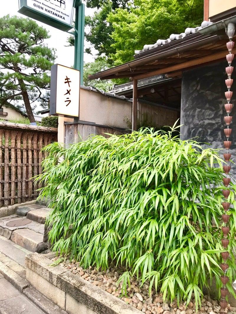 キメラ 京都