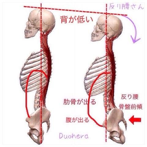 を 締める 肋骨