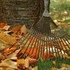 爽やかな秋晴れの日、皇居清掃3日目はまるで秋の遠足のように楽しかった♪の画像
