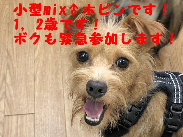 第69回ARCh里親会 参加犬決定しましたの記事より