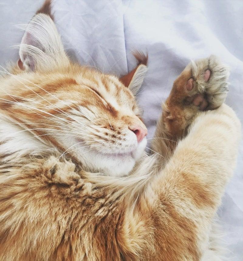 猫 アレルギー 症状
