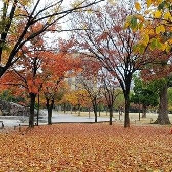 11月14日・11月21日 中央公園まち歩き