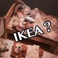 TDS【モフモフちゃんのベッドを狙え!】IKEAへGO!