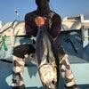 カカシ (笑) マグロ釣るの画像
