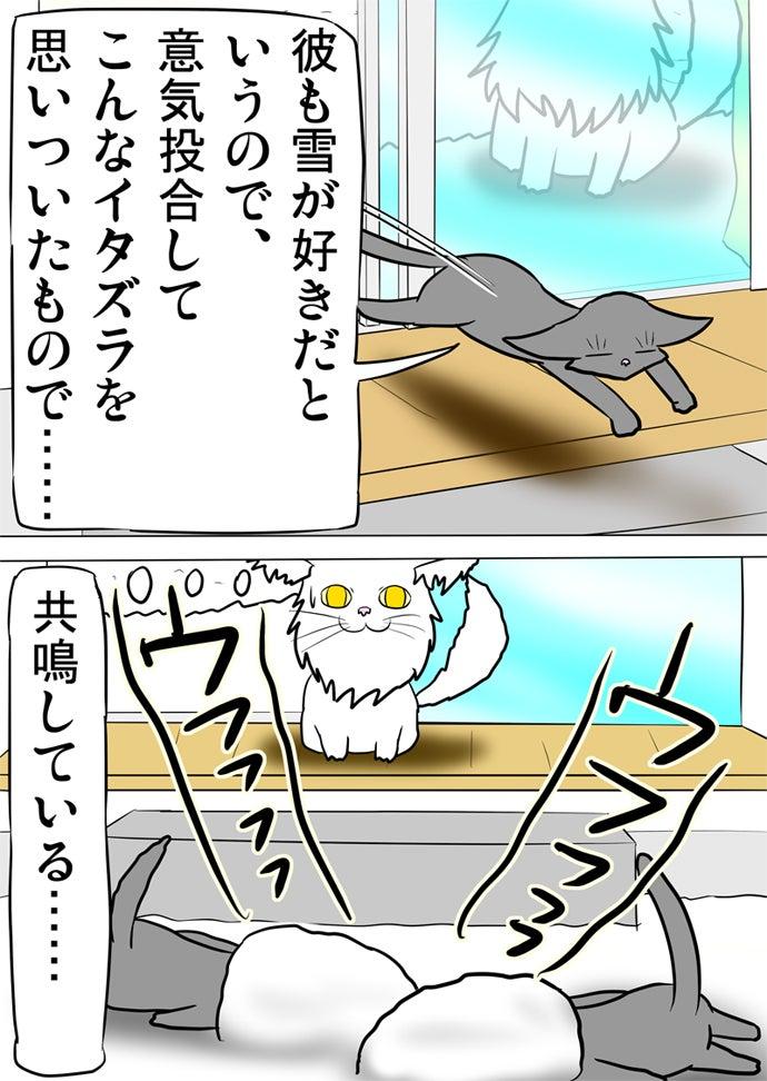 開いた窓から外に飛び出して庭に積もった雪に顔をうずめて不敵に笑うロシアンブルー猫二匹を呆れて眺める白いメインクーン猫