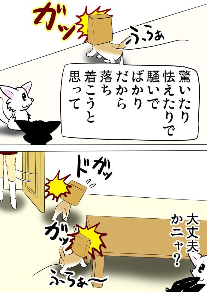 白い壁やテーブルの足や開いたドアに頭をぶつける茶色い紙袋を被ったスコティッシュフォールド猫を眺める白い子猫と黒い子猫