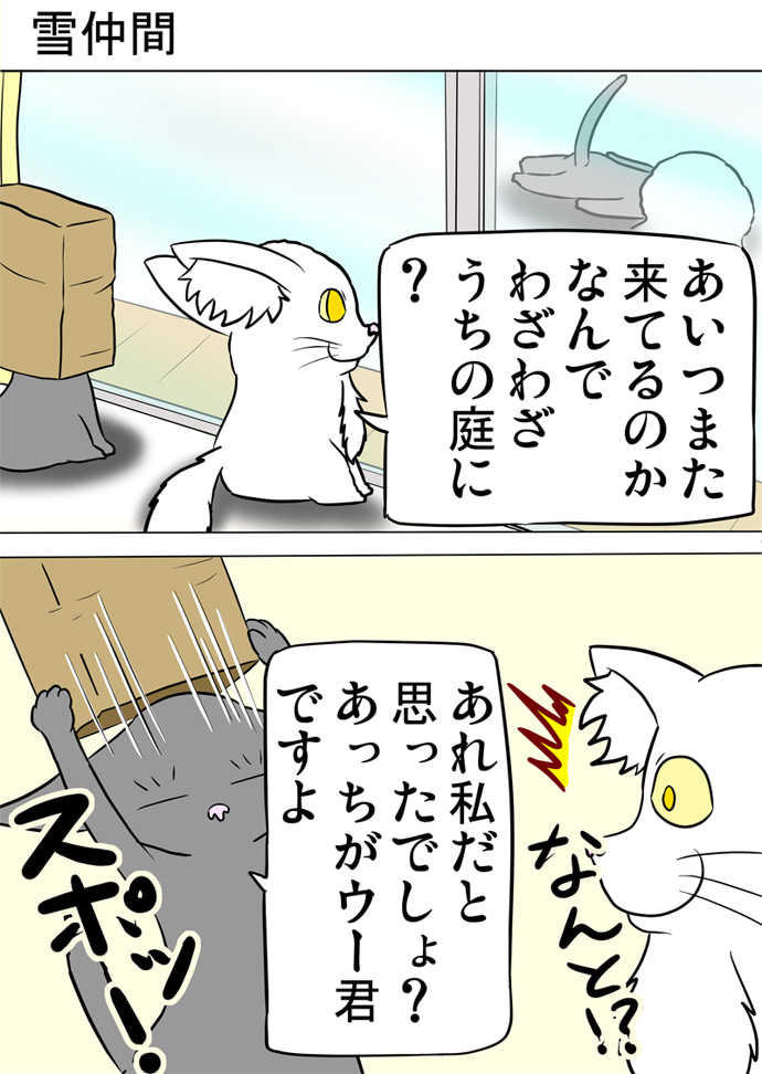 窓の外の雪の積もった庭で雪の塊に顔をうずめてうつぶせに寝そべるロシアンブルー猫を眺めて被っていた茶色い紙袋を脱ぐロシアンブルー猫の方を振り返る白いメインクーン猫