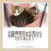 子猫譲渡会にお越しいただきありがとうございました!