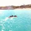 ウミガメと一緒に泳ぎたいの画像