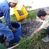 余市エコビレッジで、排水浄化装置制作ワークショップの画像