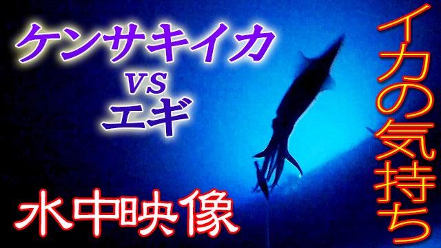 衝撃!!イカの水中動画( ゚Д゚)