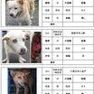 保護動物公示情報 2019/09/17・18