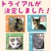 9月18日の【猫の譲渡会@豊田市動物愛護センター】の結果報告