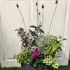 お花に癒されて…の画像