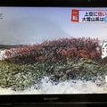 北海道大好き日々の日記