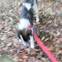 画像 ソアラの1歩・2歩・散歩日記 9月後半~10月初旬 の記事より 3つ目
