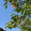 『青空ハワイアンフラ』イベントが開催されました☆の画像