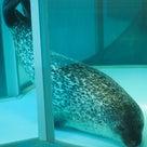 9月6日ののんほい、アザラシ、サイ、ペンギン、トラ、オランウータンの記事より