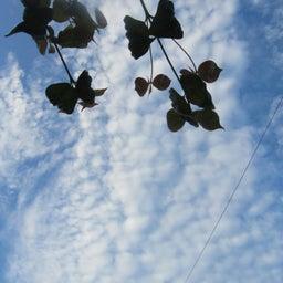 画像 ♡あの頃の夢を・・探しにゆきたい(*^▽^*)~♡ の記事より 1つ目