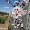 【生徒さん対象】コンテスト前農園開放日についての画像