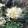 珍しい花 だと思う…の画像