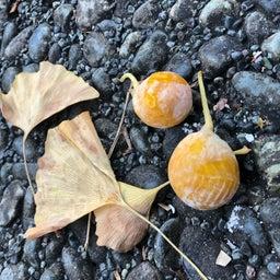 画像 秋を感じ始めました… の記事より 2つ目