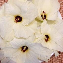 画像 このお花、食べちゃいました! の記事より 1つ目