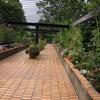 水戸植物公園の押し花展への画像