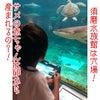 サメの赤ちゃんはどうやって産まれるの?!の画像