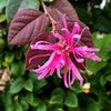 花咲く星 30の画像