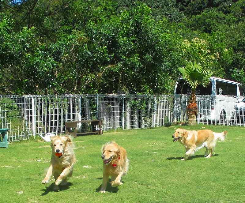 グリーン リーフ 保護 犬