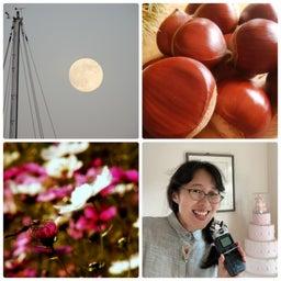 画像 【第2週】 10/12 <ほぐして ほぐされて> 栗名月と秋のイベントたち の記事より 1つ目