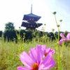 奈良 大好きの画像
