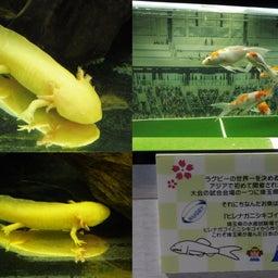 画像 さいたま水族館&羽生水郷公園(埼玉県羽生市) の記事より 6つ目