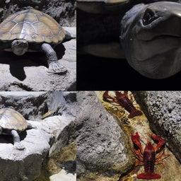 画像 さいたま水族館&羽生水郷公園(埼玉県羽生市) の記事より 5つ目