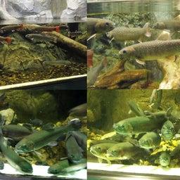 画像 さいたま水族館&羽生水郷公園(埼玉県羽生市) の記事より 4つ目