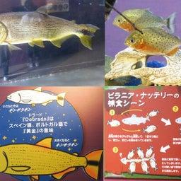 画像 さいたま水族館&羽生水郷公園(埼玉県羽生市) の記事より 2つ目