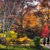 トロントで楽しめる秋の屋外イベントの画像