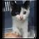 今日!10月15日まで!山口健康福祉センターに可愛い子猫ちゃんが収容されています