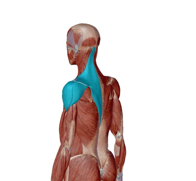 【30代 女性】肩を動かした時のズキっとする痛み | Koki Body Care ...