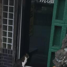 画像 ソープランド「みね」に入ろうとする猫と船橋の数字連続地名 の記事より 5つ目