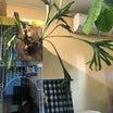 台風に備えて、植物も避難