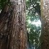日本の森から生まれた、誠実な精油。の画像