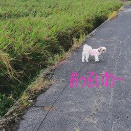 画像 秋桜散歩 の記事より 1つ目