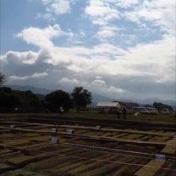 画像 秋の橿原市、発掘現場現地説明会三昧!(2019.10.6) の記事より 5つ目