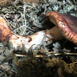 画像 秋の風味〜岩手県産の天然マツタケをいただく! の記事より 2つ目