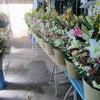 開店のお花~♪の画像