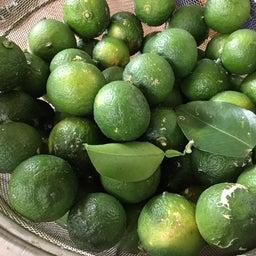 庭の青柚子収穫