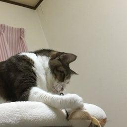 画像 新しい猫タワー の記事より 1つ目