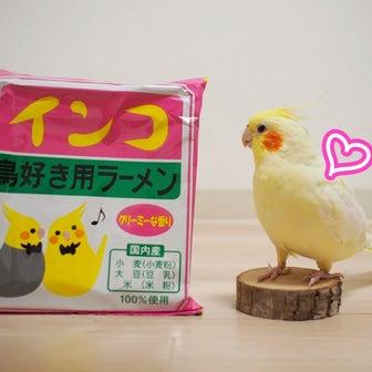 インコ 鳥好き用ラーメン【キィちゃん編】